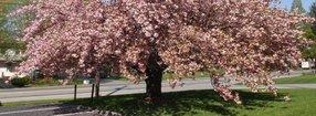 Blossom Hill Mennonite Church